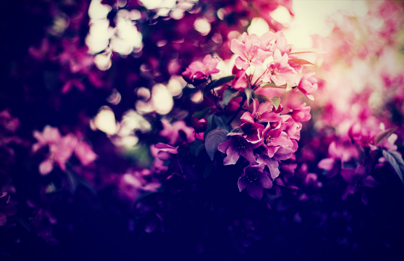 flowers_side image_800x517